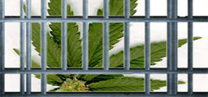 marijuana-jail-pot-crimes-new-pot-laws