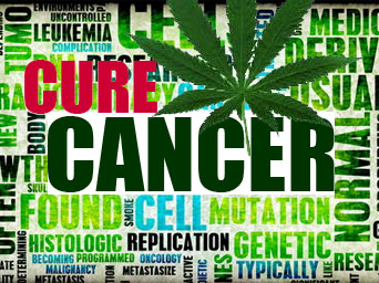 cannabis-cures-cancer-CHALLENGING-THE-RHETORIC